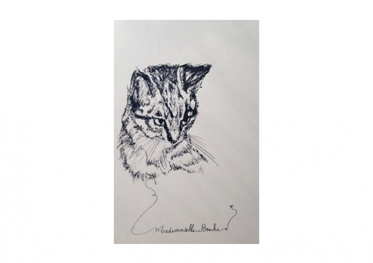 chat-webdog_chat_cat_dessin_mademoiselle_melle_bouche_art_creation