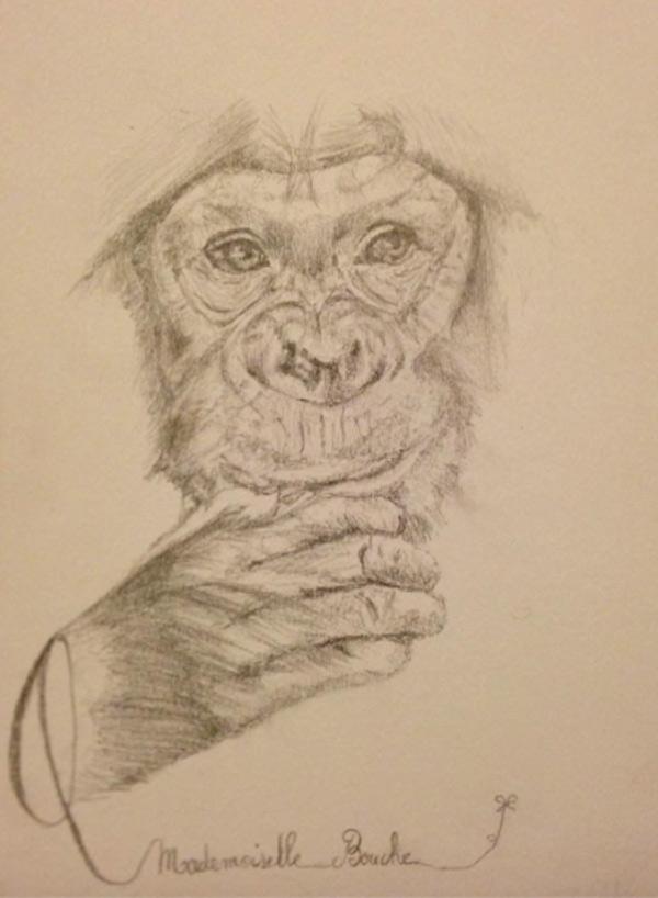singe_zoo_animaux_art_dessin_melle_mademoiselle_bouche